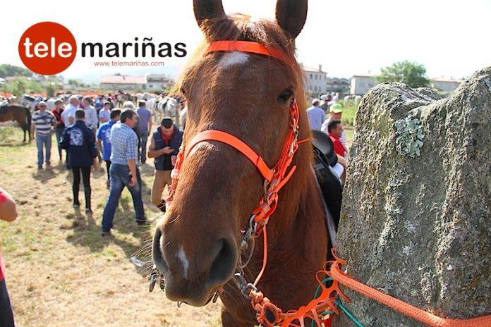 Xuntanza cabalar y andaina en Loureza