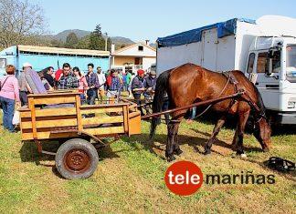 caballo_carro
