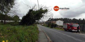 Un árbol cae sobre el tendido eléctrico en A Guarda