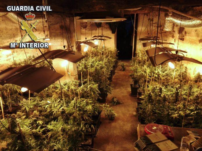 Detenidas tres personas tras la incautación de 3.000 plantas marihuana