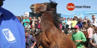 El curro de A Valga reunió a 250 caballos en Oia