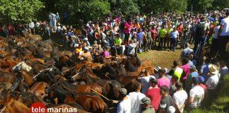 Cientos de personas asisten al segundo curro de la temporada en Torroña
