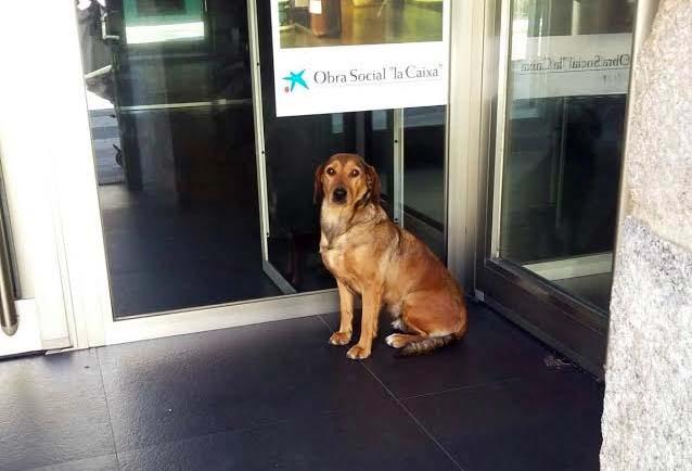 Una perra busca a su dueño en un cajero automático de A Ramallosa