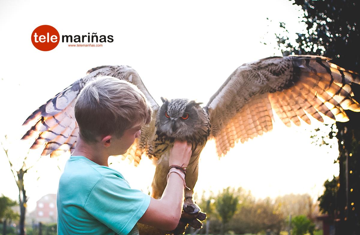 buho_real_aves_rapaces_vincios_gondomar_3