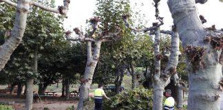 Baiona poda los árboles públicos para evitar inundaciones