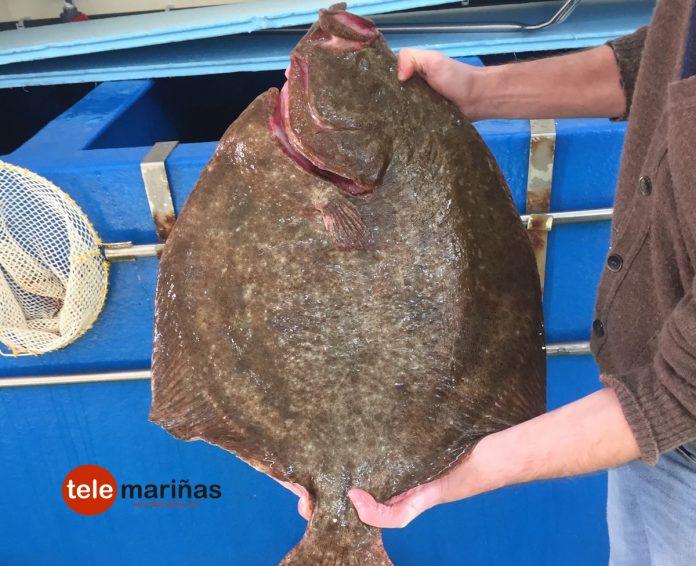 Capturan un rodaballo de 8 kilos en Baiona
