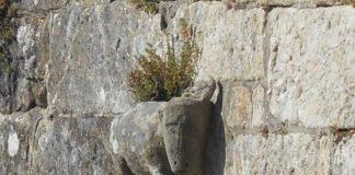 "Baiona sinalizará o ""misterioso boi"" da fortaleza para celebrar os 520 anos da 'Carta Puebla' dos Reis Católicos"