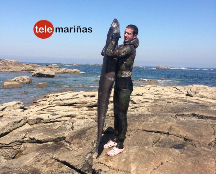 Captura un congrio de 31 kilos en Cabo Silleiro