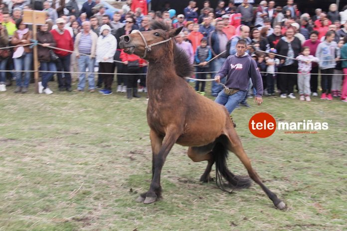 El curro de A Valga abre la temporada en Galicia