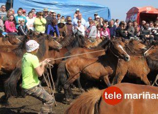 A Valga celebra el primer curro de la temporada en Galicia