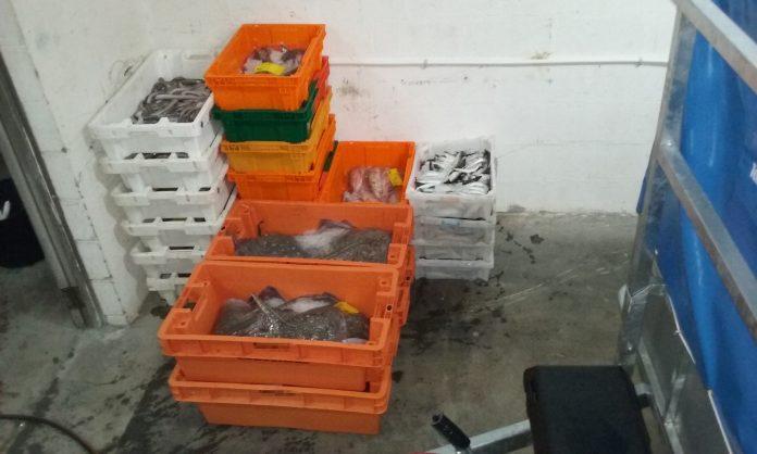 Requisan cerca de 1.300 kilos de pescado y marisco en Vigo