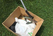 Rescatan en Tui una serpiente de gran tamaño dentro de una vivienda