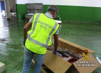 Decomisan en el puerto de Vigo un atún rojo capturado ilícitamente