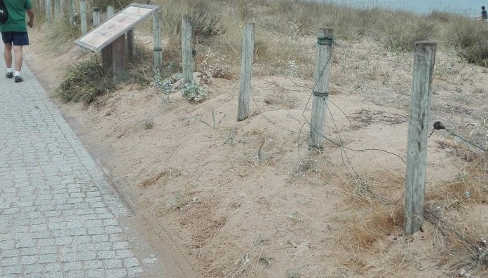 El PP de Nigrán critica la falta de mantenimiento y aparcamiento en las playas del municipio