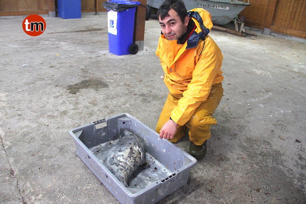 Aparece una foca viva en el puerto de A Guarda