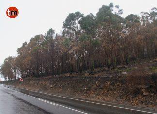 Medio Rural retira madera no comercial de los montes de A Guarda, O Rosal, Nigrán y Gondomar