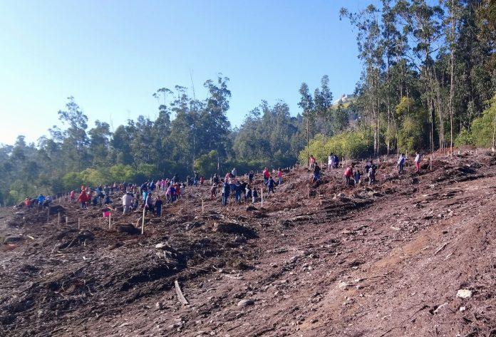 Alumnos de centros escolares de A Guarda plantan 1.000 árboles en el Monte Trega