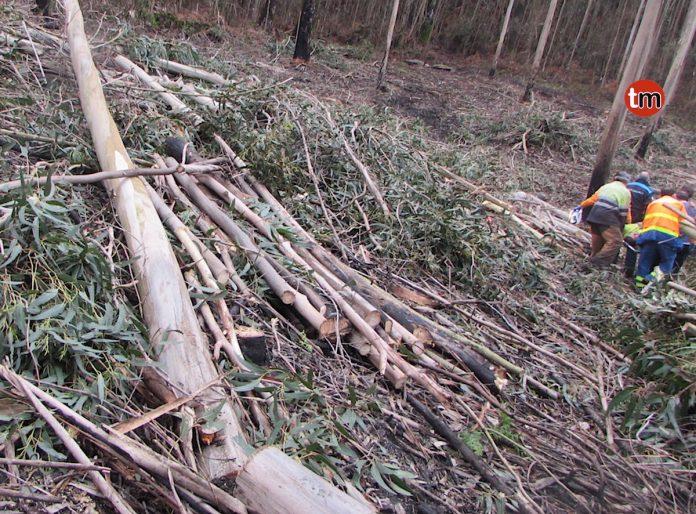 Herido un operario tras caerle un árbol encima en Chaín