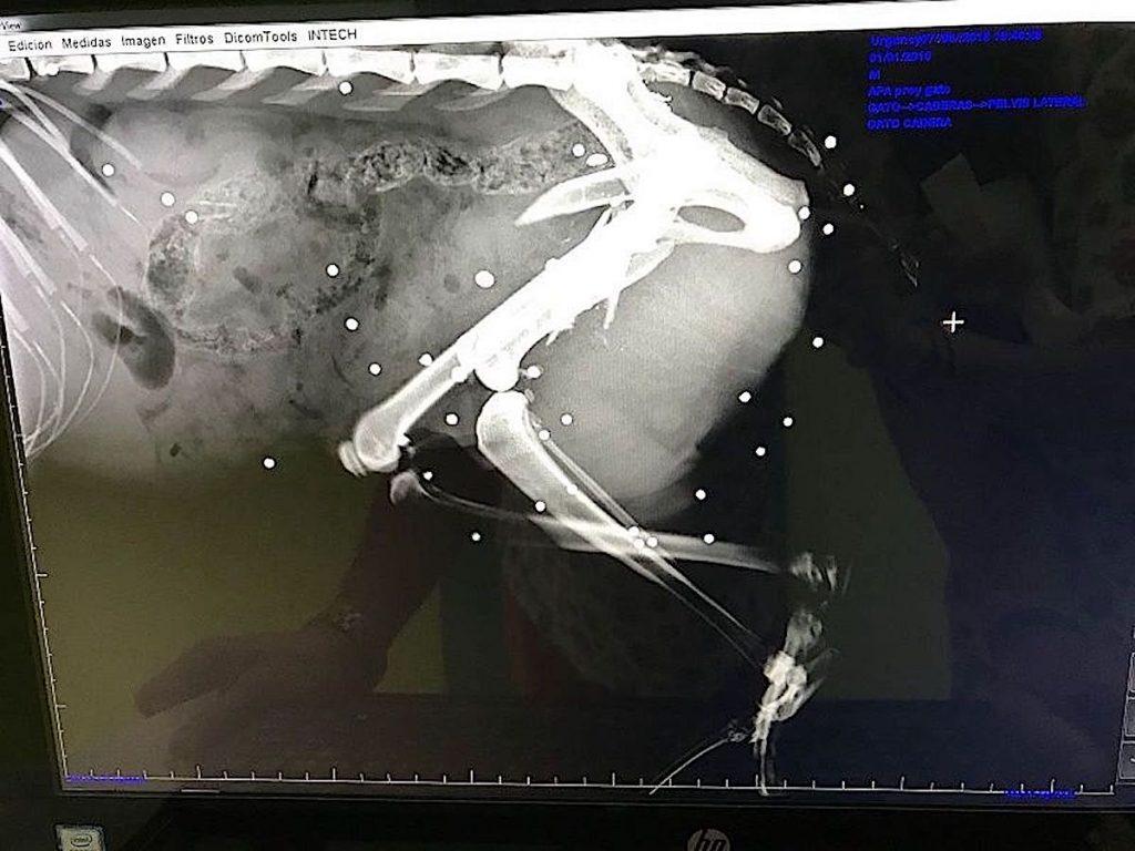 Nuevo caso de maltrato animal: Acribillan a balinazos un gato en Gondomar