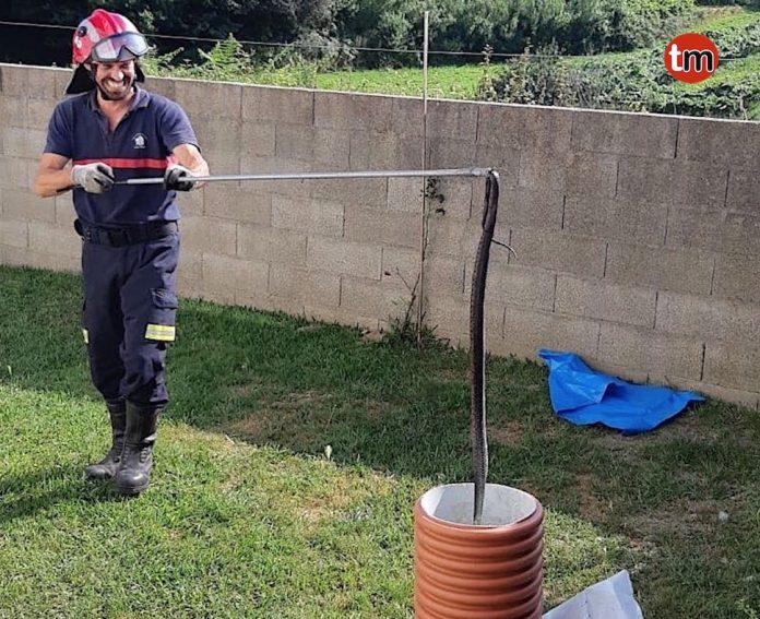 El GES de O Val Milor retira una culebra bastarda del jardín de una vivienda en Parada