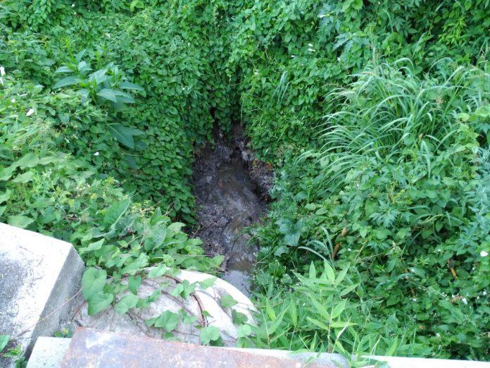 O BNG de Gondomar denuncia un vertido de fecais no río Miñor, no centro da vila
