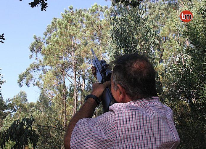 Un vecino de Goián extermina las Avispas Velutinas a balinazos