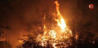 Controlados los incendios de Tomiño