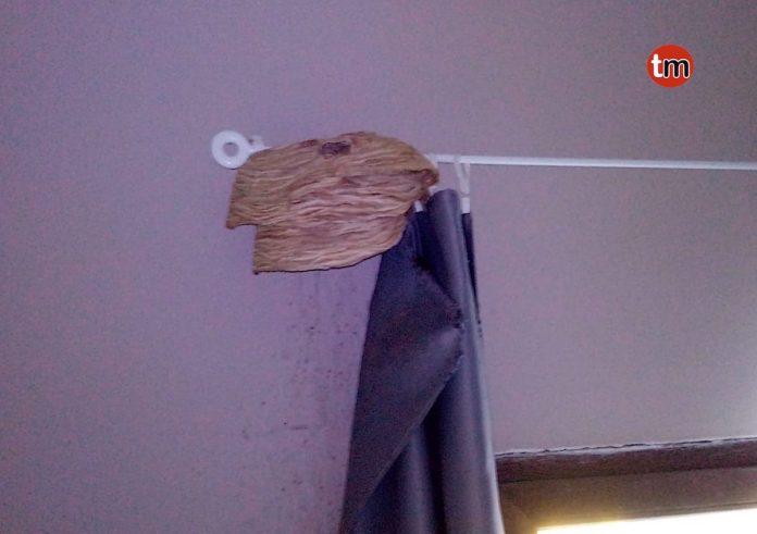 Pasan unos días fuera y al regresar encuentran un nido de avispa dentro de su casa en Tomiño