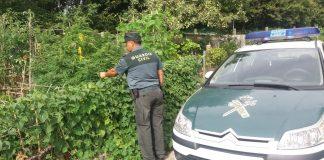 La Guardia Civil se incauta de varias plantas de marihuana en Gondomar