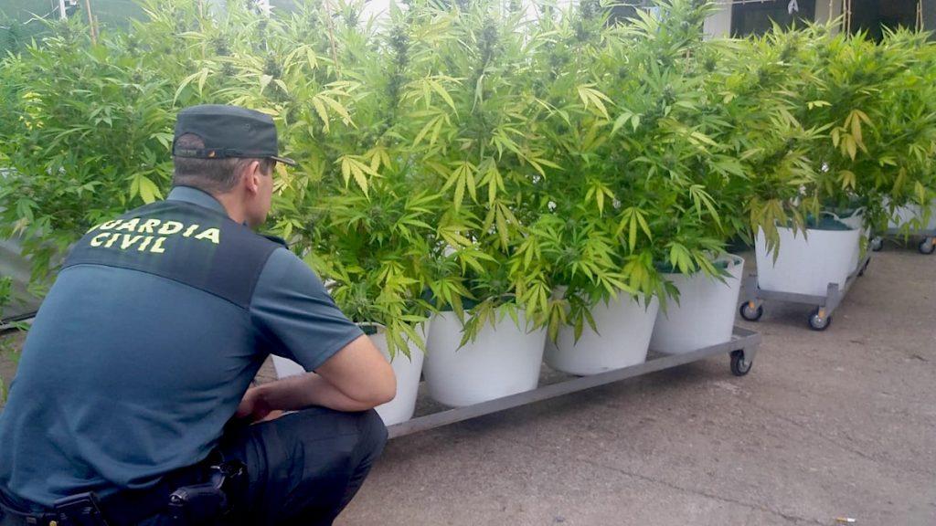 Detenido un vecino de Gondomar por la incautación de una plantación de marihuana en Vincios
