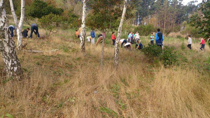 Alumnos del colegio Rodríguez Sinde erradican acacias en el Trega