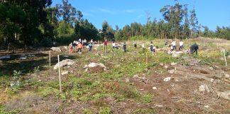 Alumnos de A Guarda erradican especies invasoras no Monte de Camposancos