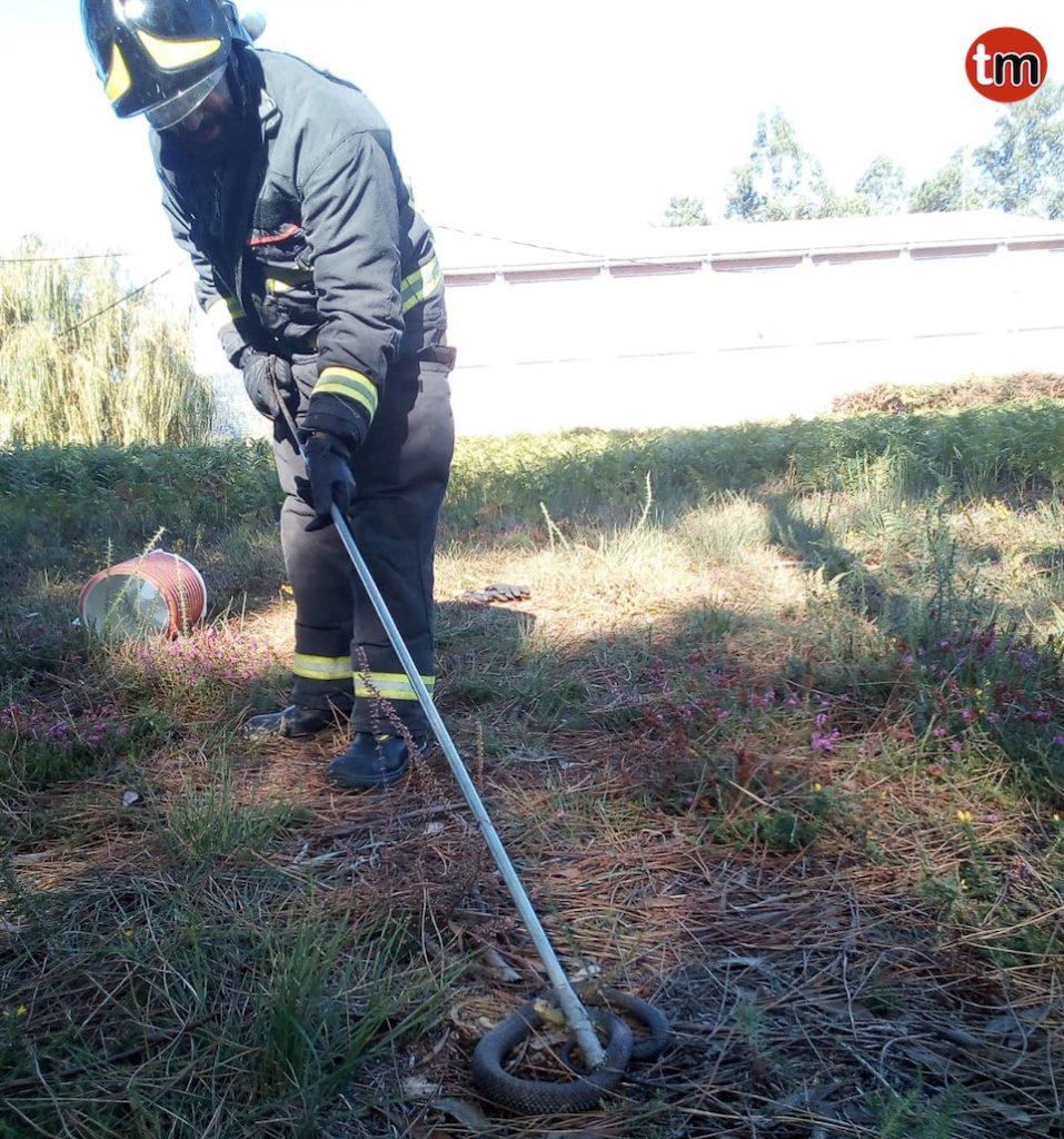El GES retira una serpiente de una finca en Panxón