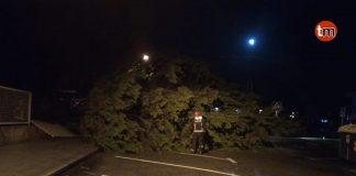 El temporal de la pasada noche tiró un árbol en Panxón