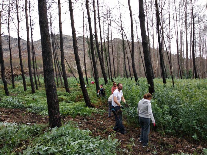 Chamamento para a retirada de eucalipto no monte de Vincios