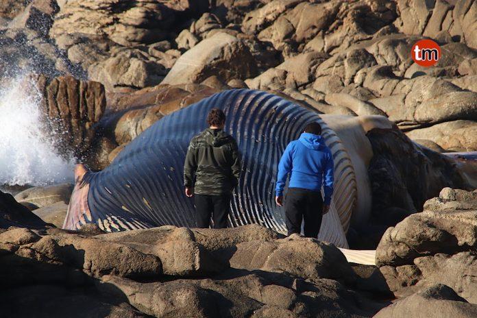 La ballena de Oia se queda en su sitio