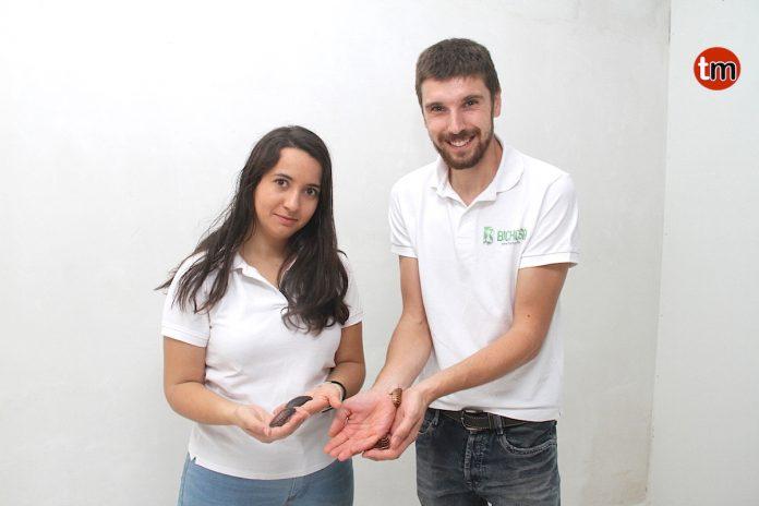 O Rosal tiene la única granja de insectos de Galicia