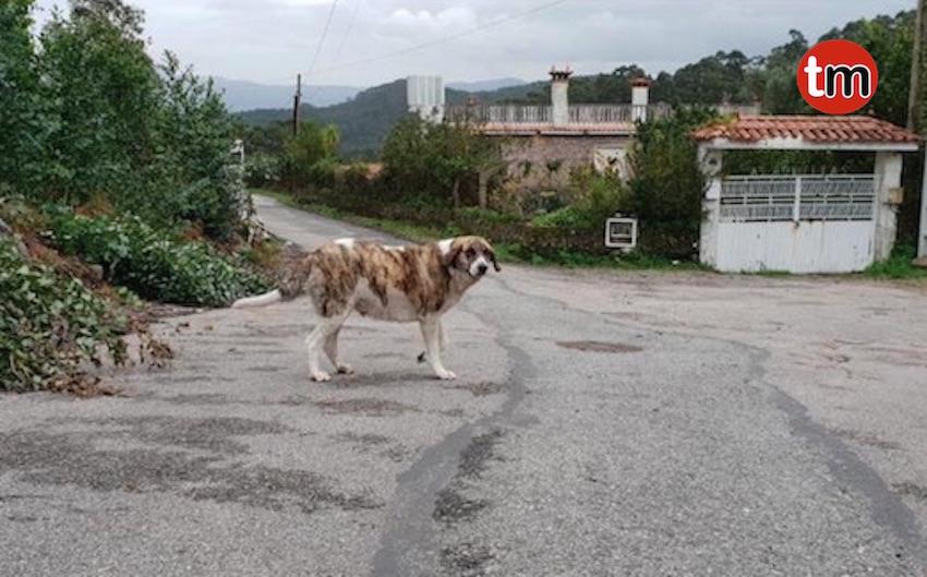 Investigan la aparición del cadáver de una perra preñada y atada de las patas de atrás en Baiona