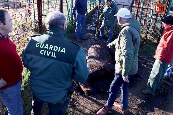 La matanza de los cuatro caballos de Oia se perpetró a golpes con una barra de hierro